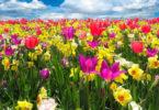 equinócio da primavera